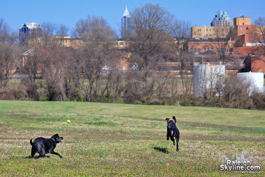 Beau and her friend Jordy enjoy playing at Dorothea Dix