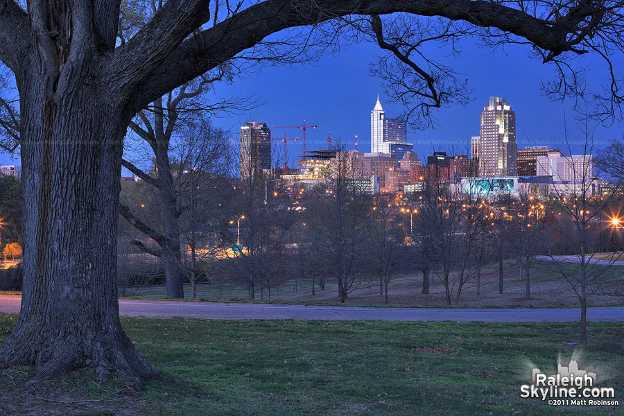 Old tree and Raleigh Skyline