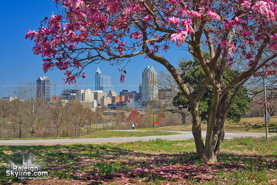 Spring blooms frame the Raleigh skyline