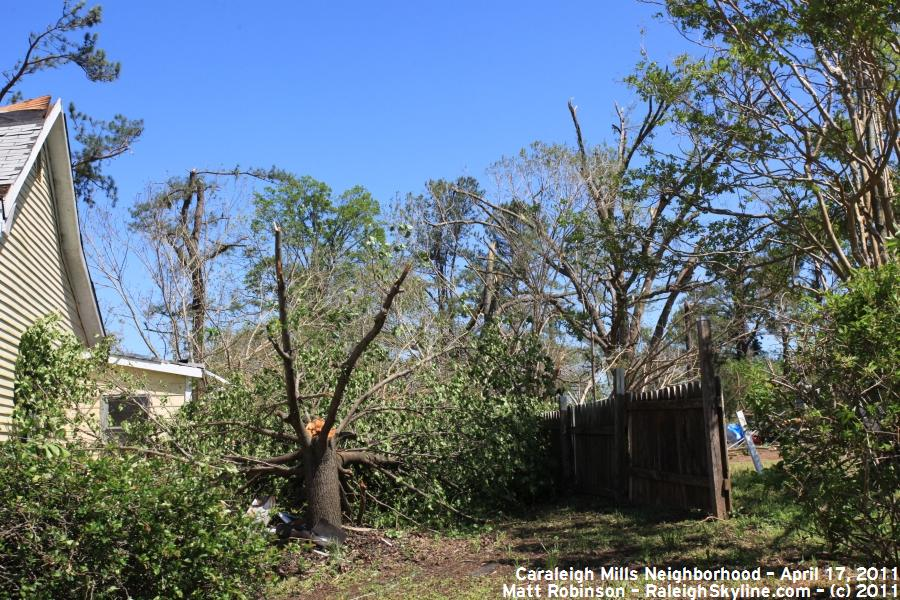 Snapped trees from April 16, 2011 Tornado that hit Raleigh, NC