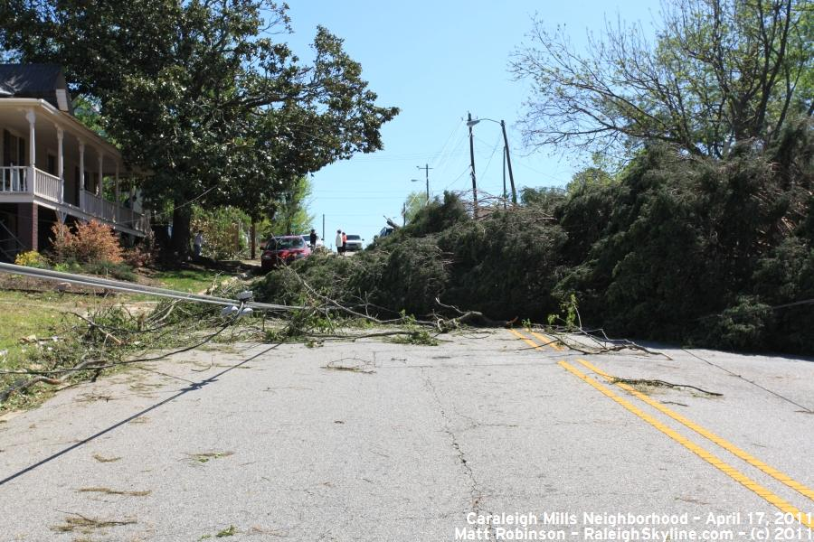 Downed trees on Maywood Ave