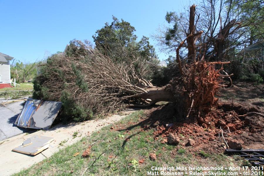 Damaged tree on Maywood