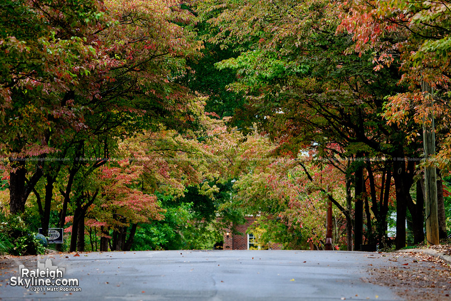 Early fall colors in Raleigh's Mordecai neighborhood