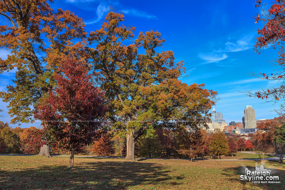 Fall trees at Dix Hill