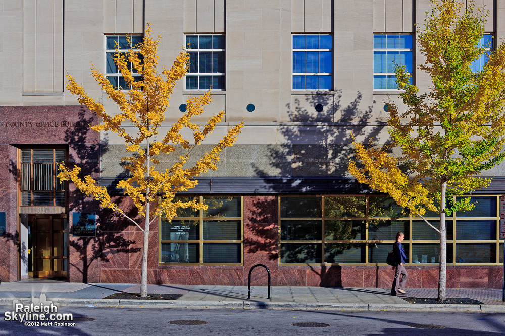Yellow leaves at the Wake County Office Building