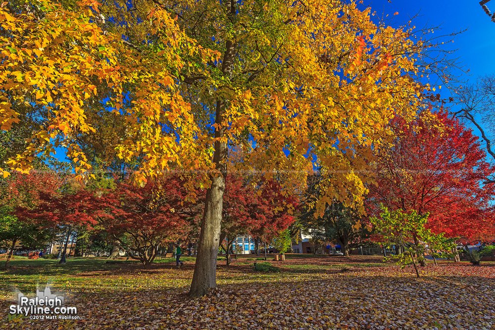 Autumn Colors in Raleigh's Nash Square