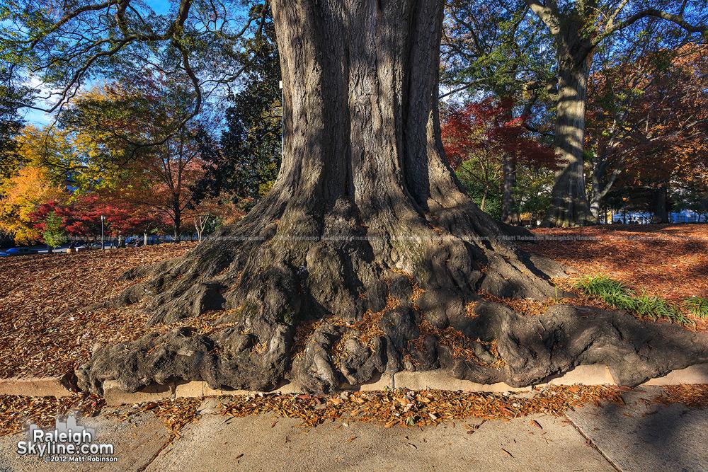 Overflowing tree trunk in Raleigh