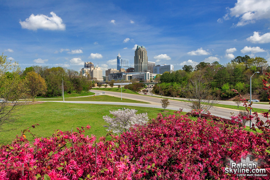 Springtime in Raleigh