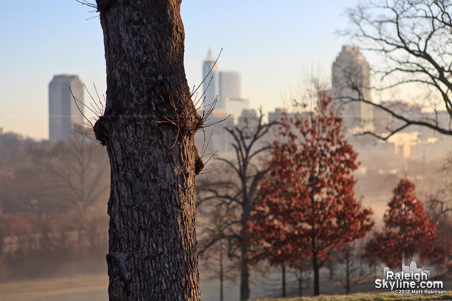Tree trunk on Dix Hill