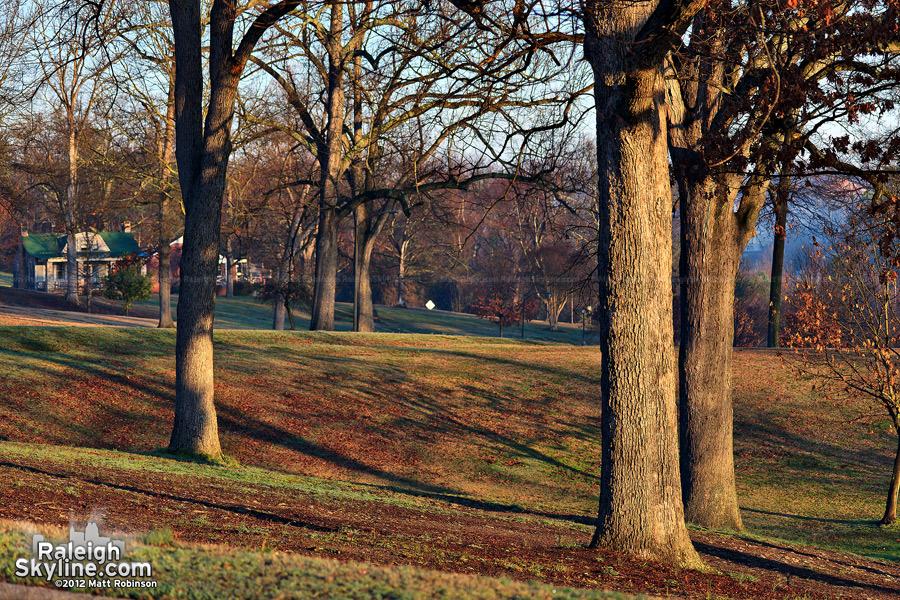 Sturdy trees on Dix Hill