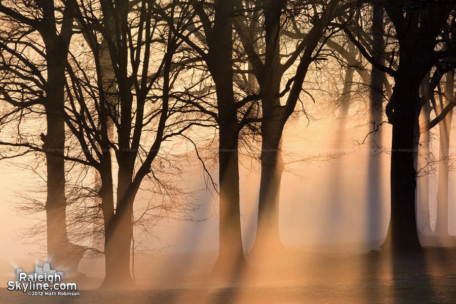 Beams of light through trees and fog
