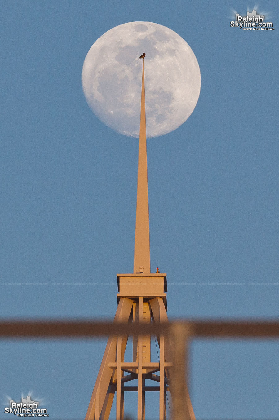 Red-tailed hawk sits atop PNC Plaza with the full moon