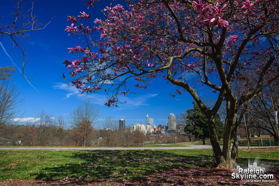 More springtime views of Raleigh, NC from Dorothea Dix