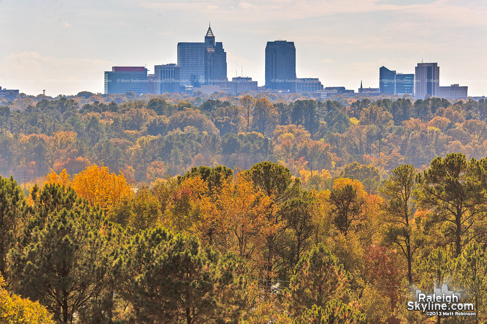 Above Raleigh's canopy of leaves