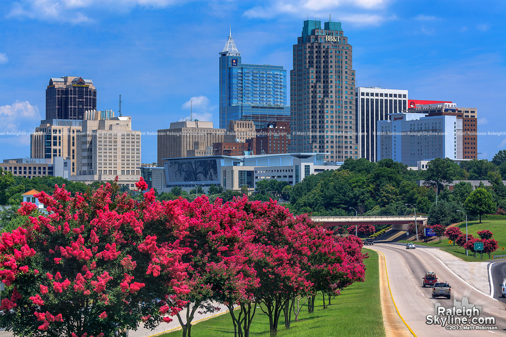 Crepe Myrtles with the Raleigh Skyline 2013