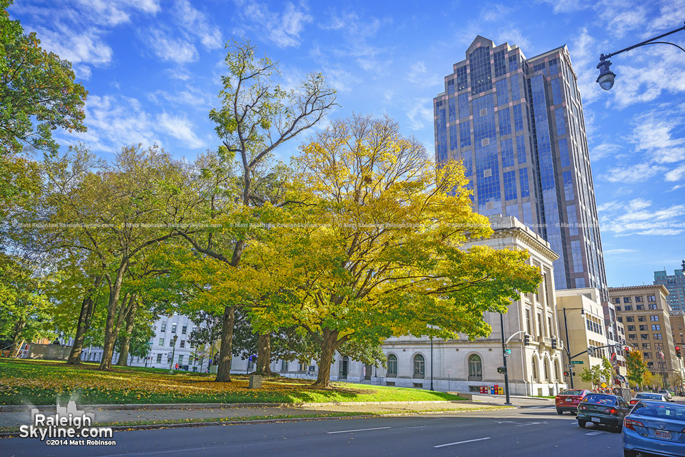Yellow Leaves in Downtown Raleigh