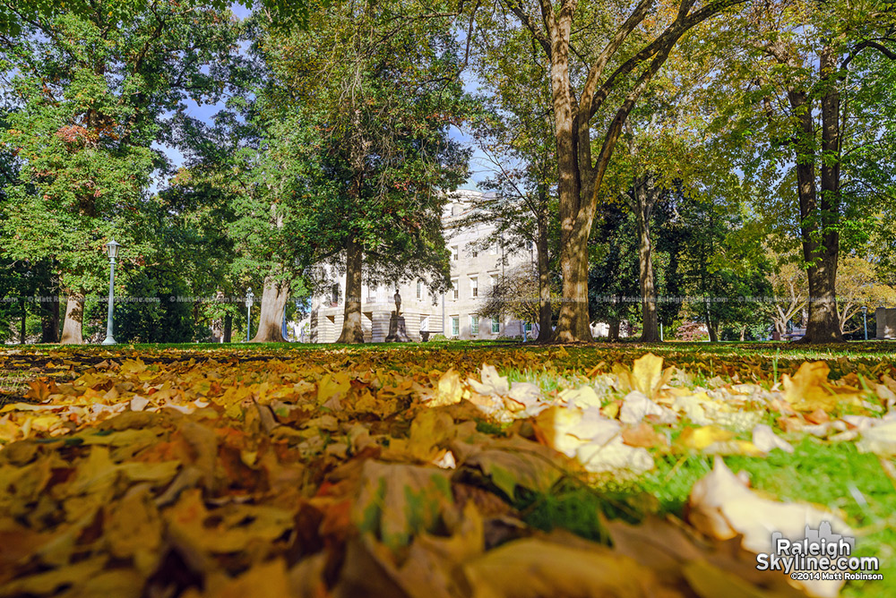 Capitol grounds with fallen leaves