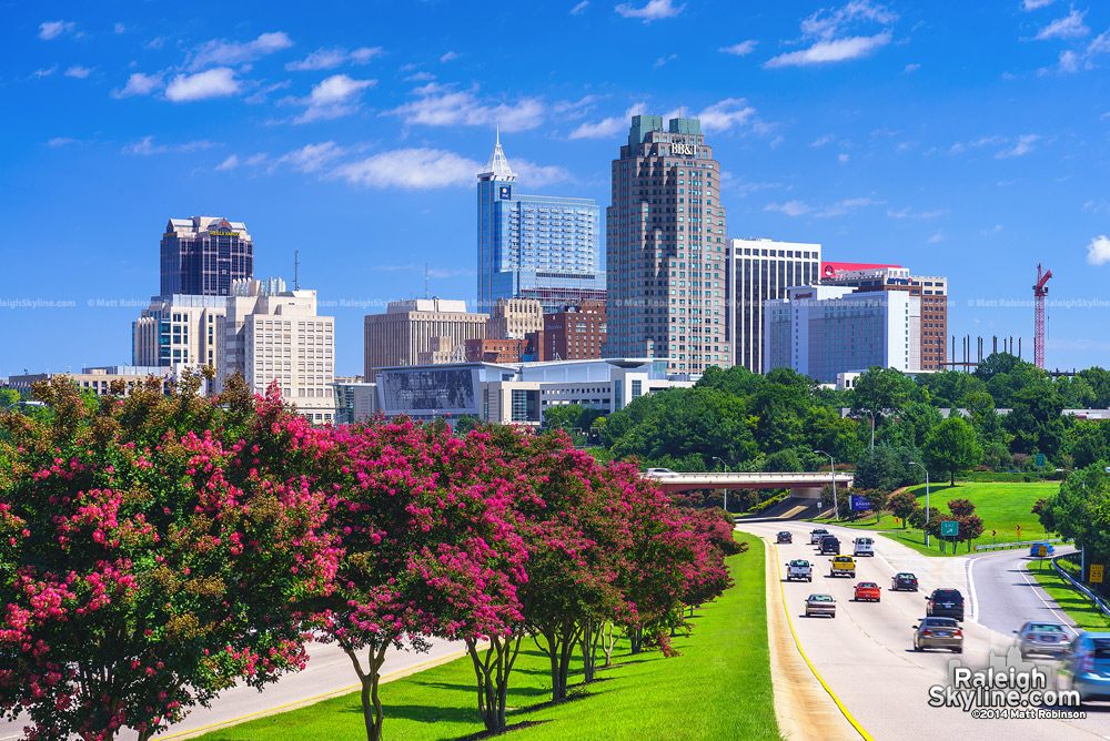 Crepe Myrtle blooms in August with Downtown Raleigh