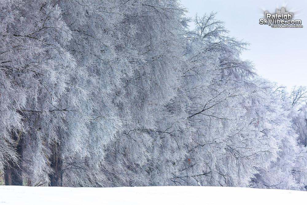 Ice glazes trees at Dorothea Dix on February 13, 2014