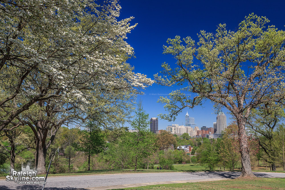 Clear sunny day with flowering trees and the Downtown Raleigh Skyline 2014