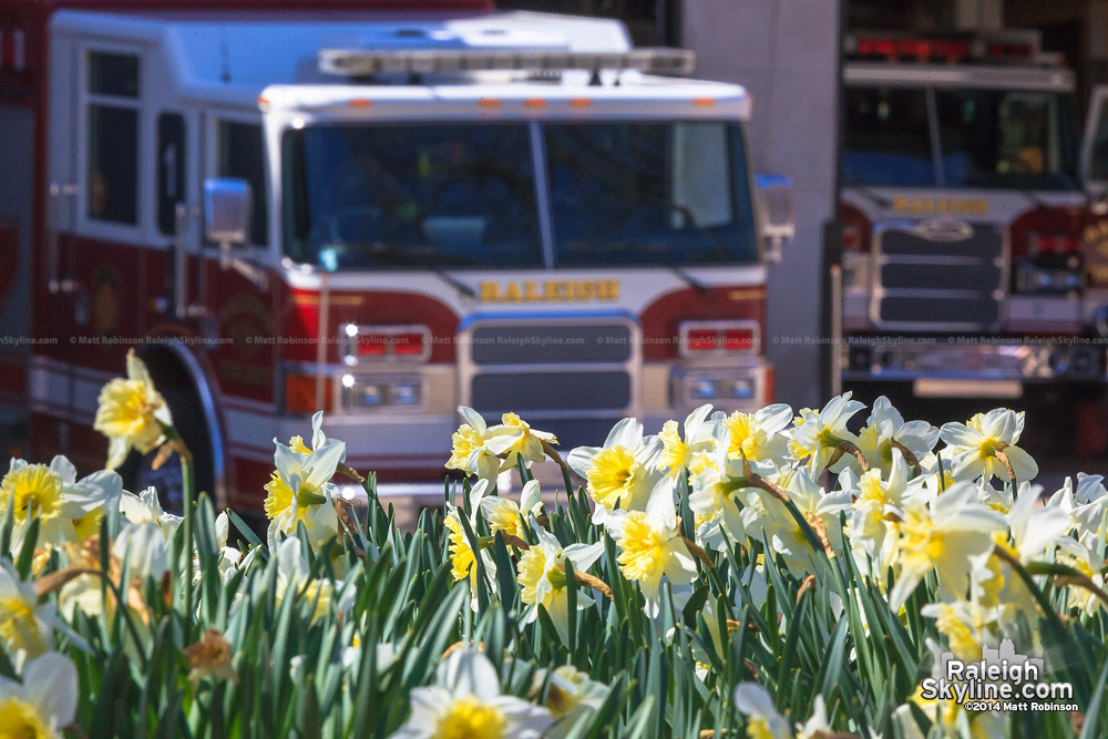 Raleigh firetrucks and Daffodils at Nash square