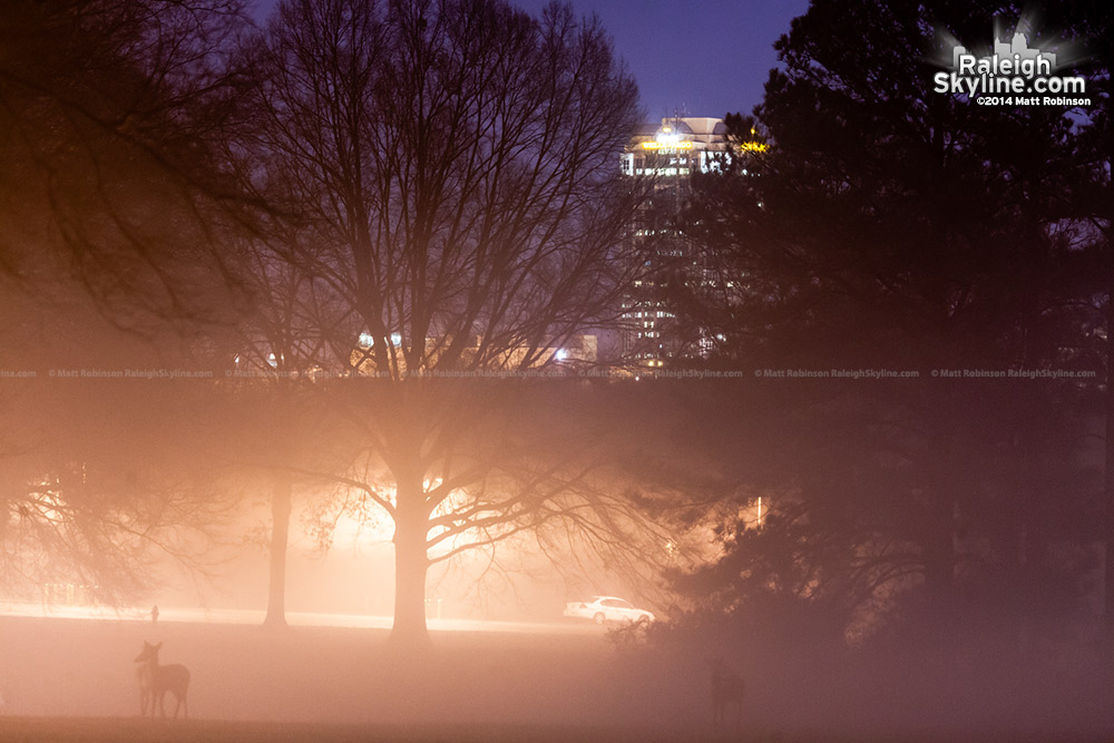 Wells Fargo Building with fog and deer