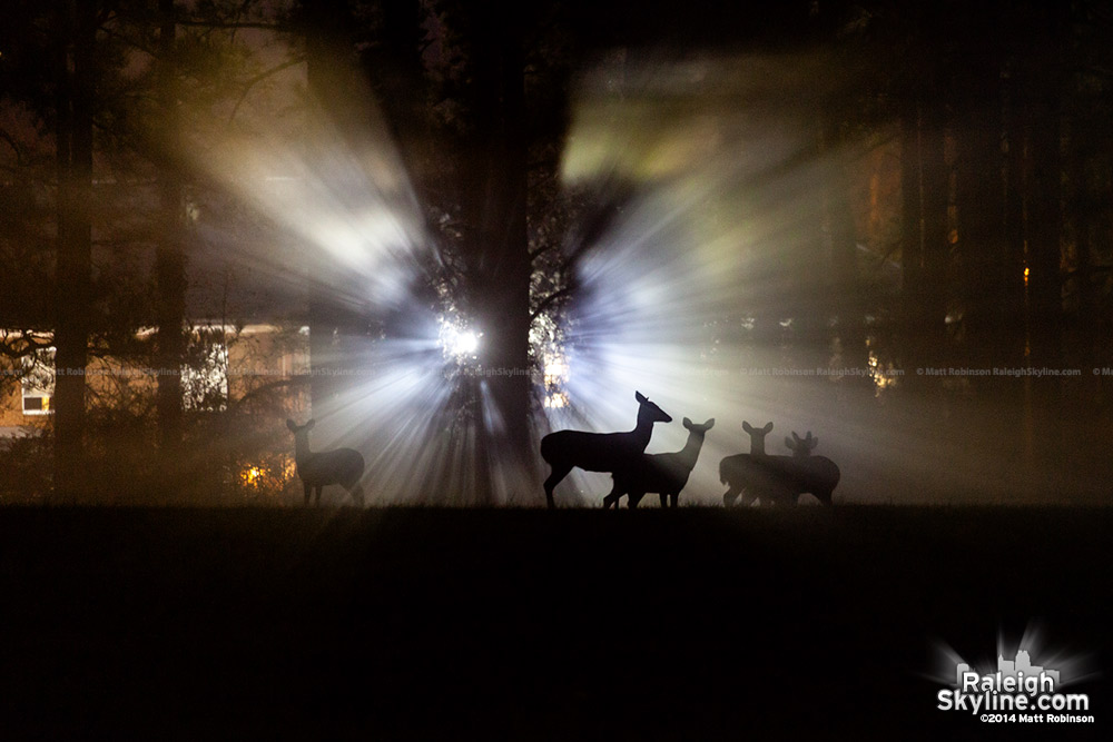 Light rays through the fog with deer silhouettes at Dorothea Dix Raleigh