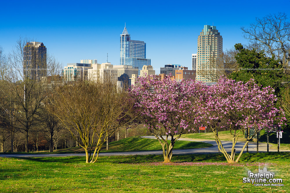 Raleigh skyline in the spring 2015 from Dorothea Dix
