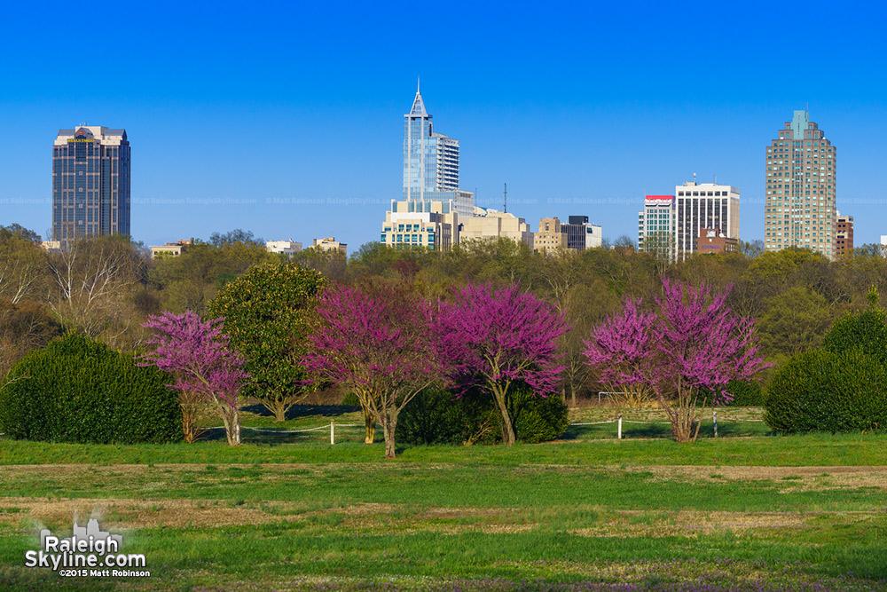 Spring Raleigh 2015