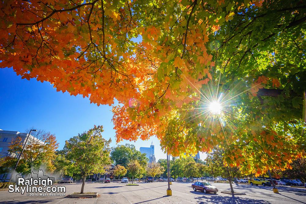 Orange maples downtown