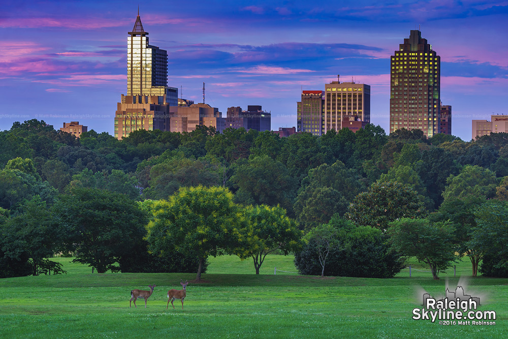 Two Deer at Dorothea Dix Park with downtown Raleigh at sunset