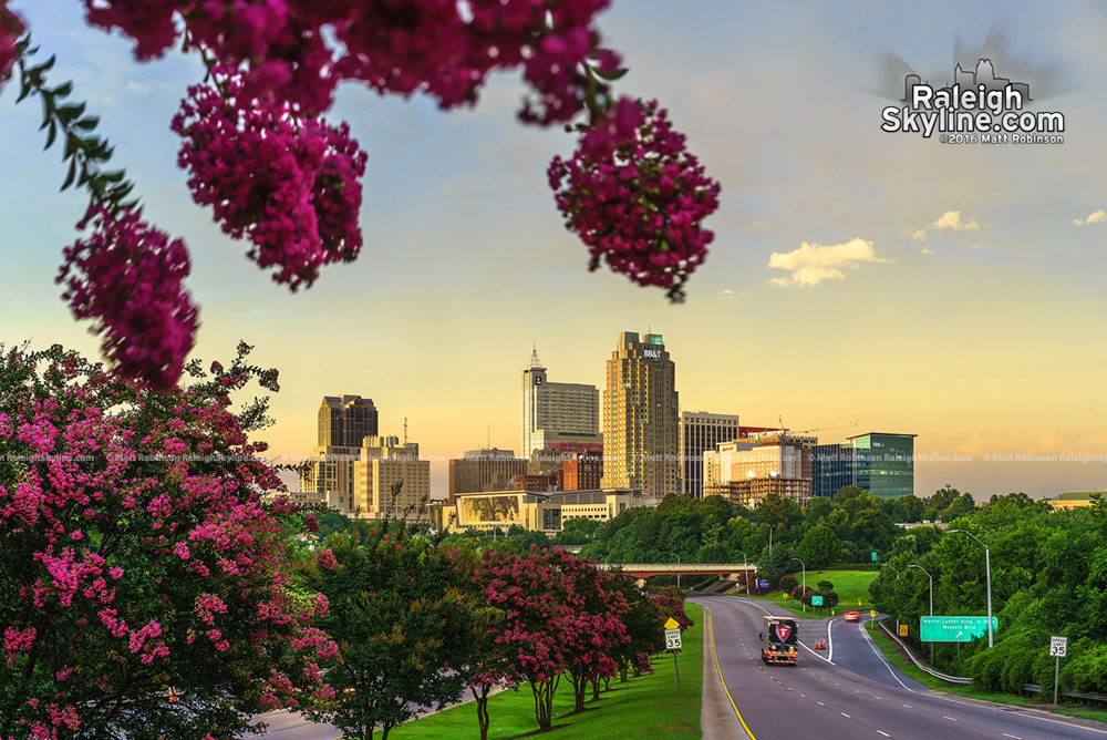 Summer blooms over Raleigh