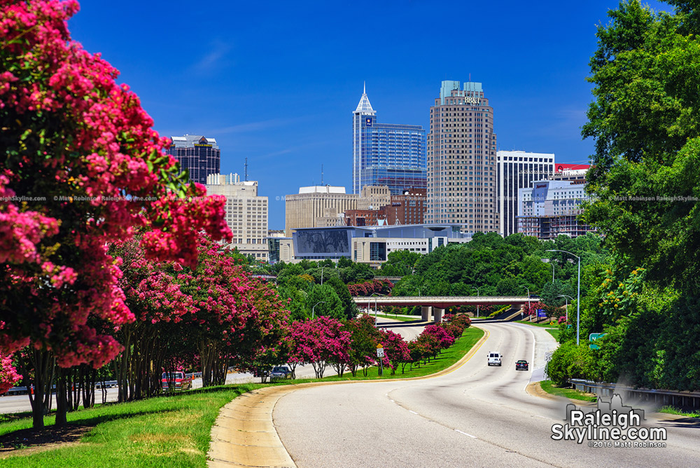 Crape Myrtle trees and the Raleigh Skyline from South Saunders