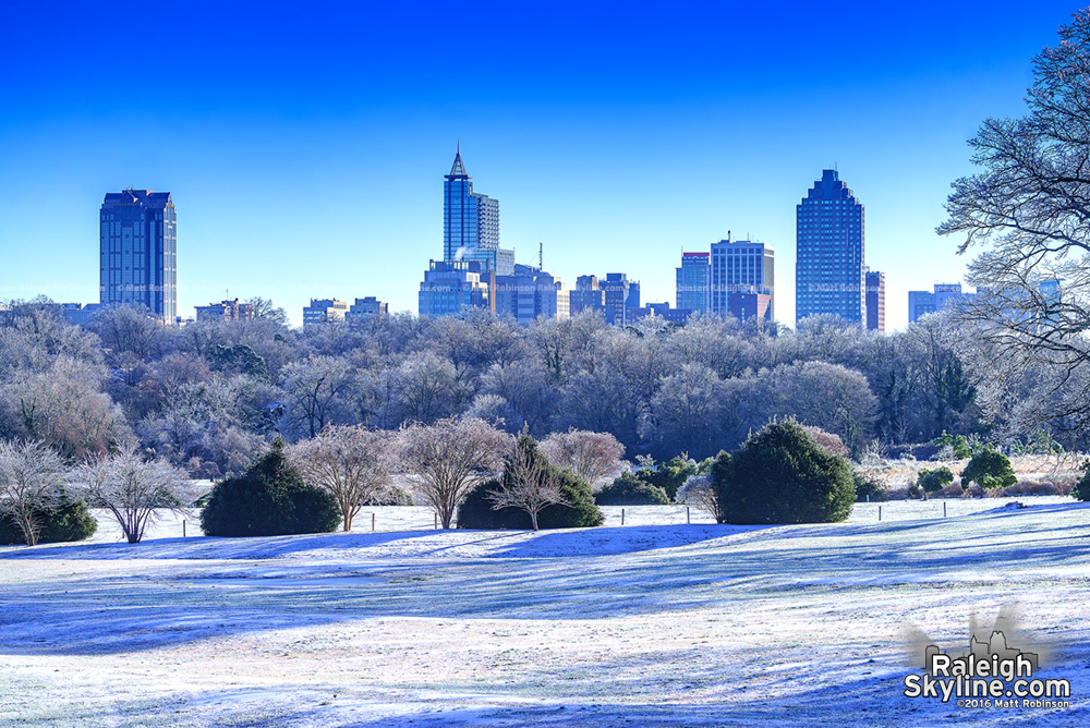 Glassy trees covered in ice with Downtown Raleigh Skyline