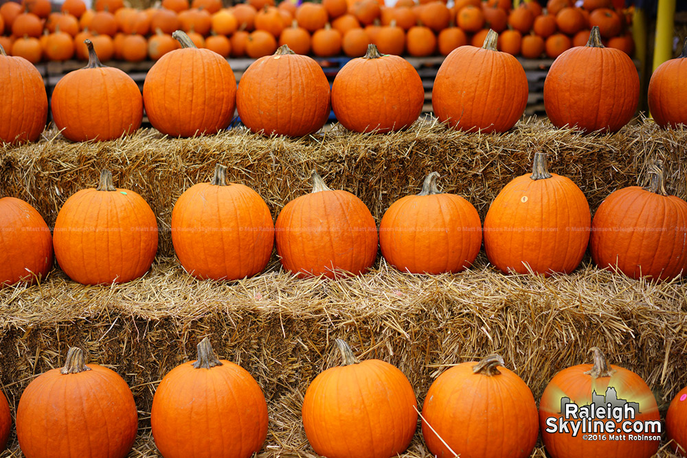 Pumpkins at the NC State Farmer's Market