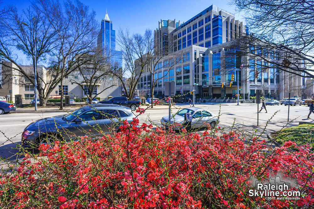 Early spring blooms at Nash Sqaure