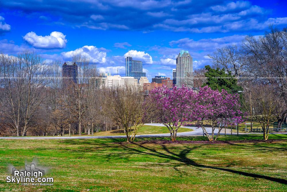 Spring bloom in Raleigh 2017