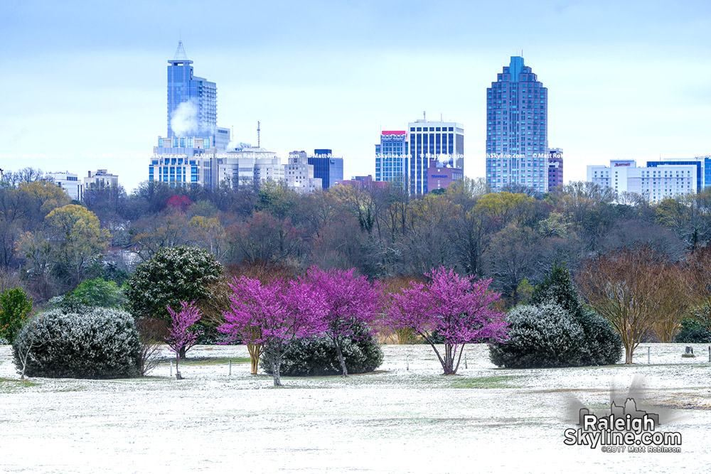 Downtown Raleigh, spring and snow from Dorothea Dix Park