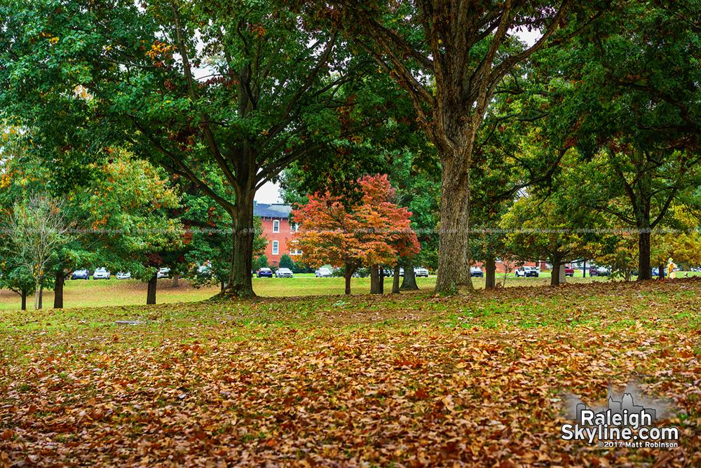 Fall colors at Dorothea Dix Park