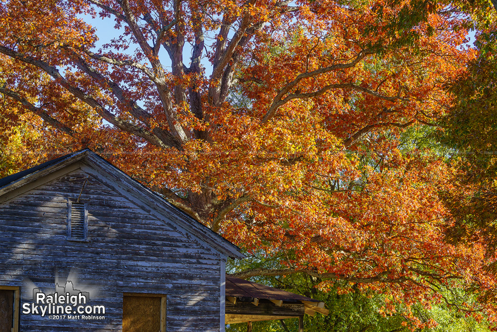 Flower cottage with Fall tree