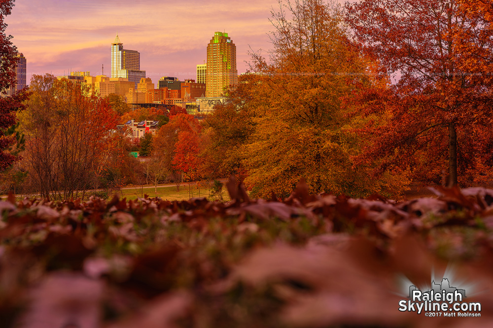 Fall leaves and downtown Raleigh from Dix Park