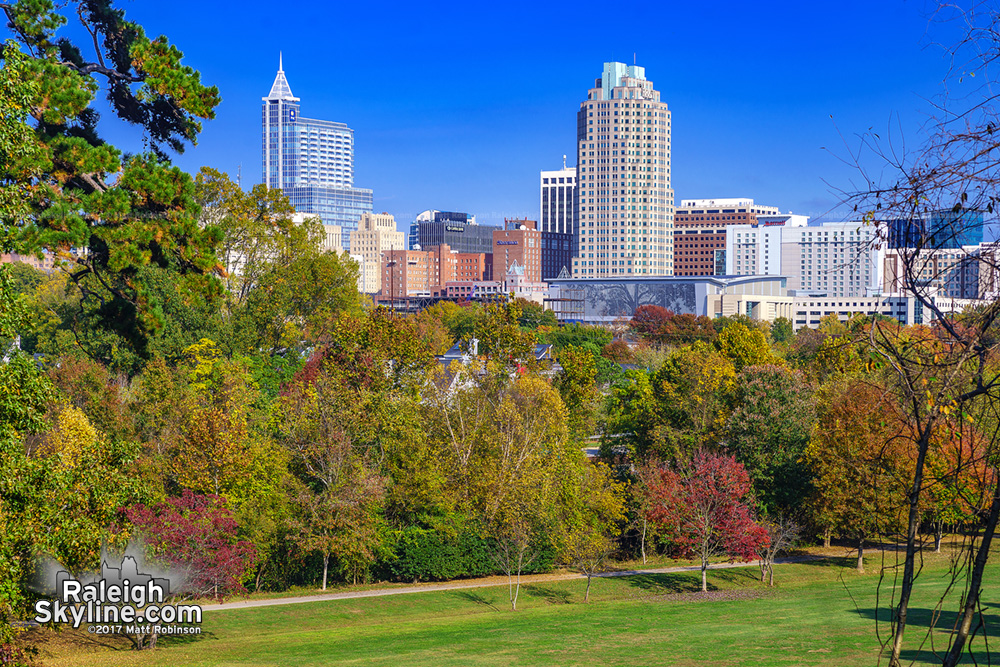 View of Raleigh after invasive species clearing from Dix Park
