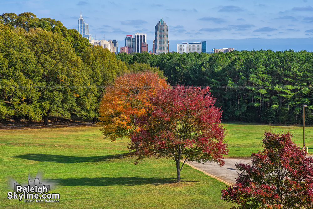 Red and Orange trees at Dorothea Dix Park