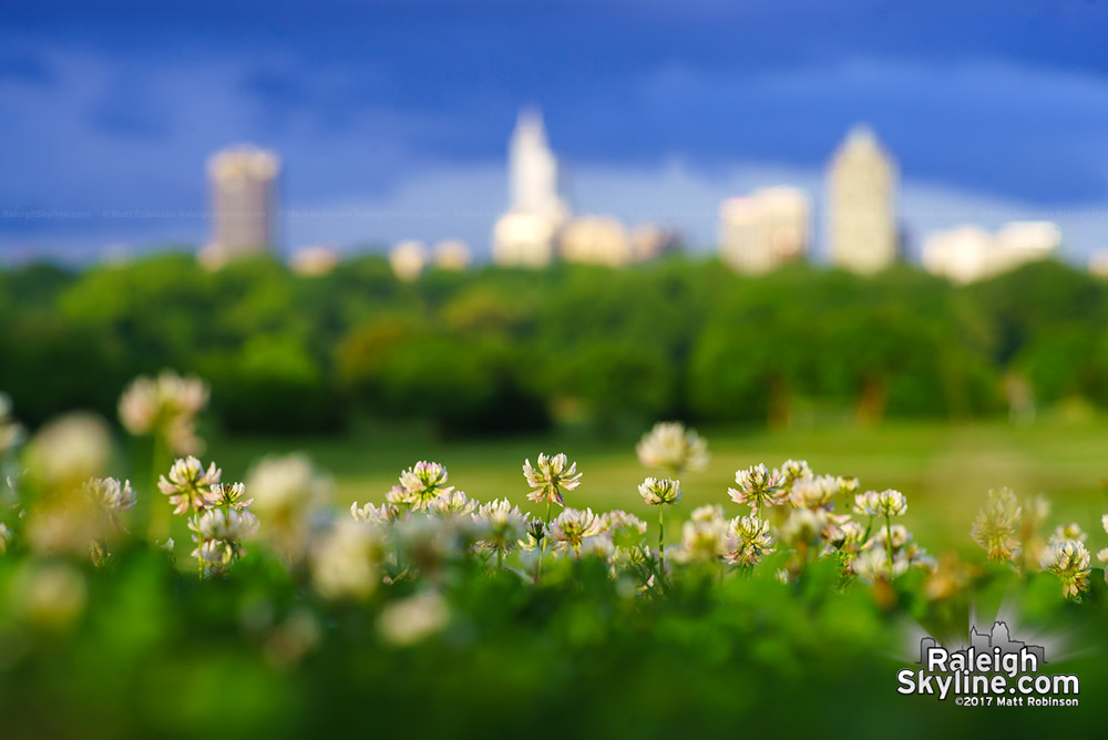 Clovers with the Raleigh skyline