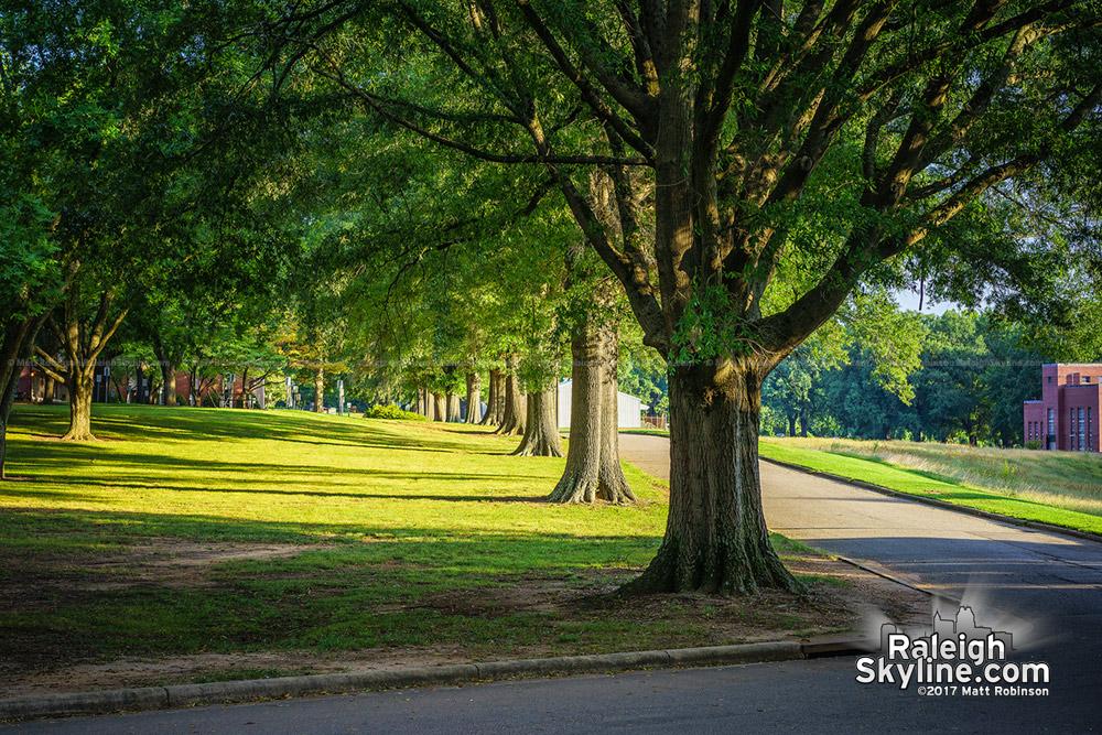 Trees at Dorothea Dix Park