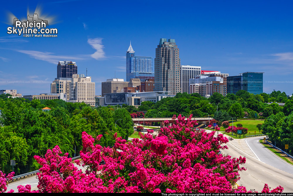 Tall tripod view of Crepe Myrtle Trees blooming with downtown Raleigh