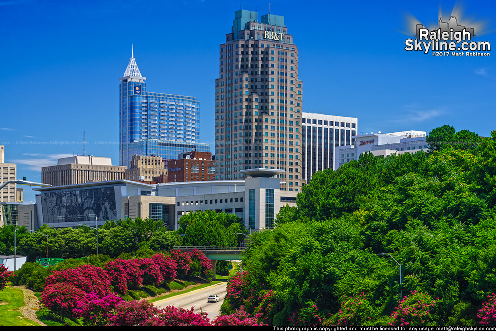 Crepe Myrtles line McDowell Street with downtown Raleigh 2017