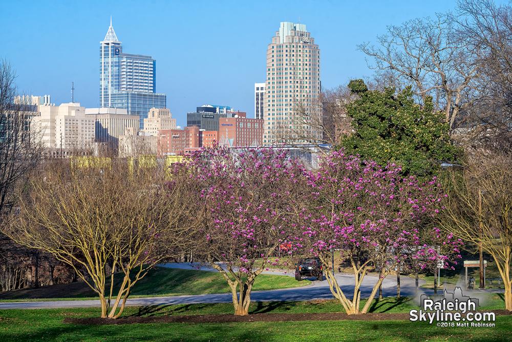 Spring at Dix Park