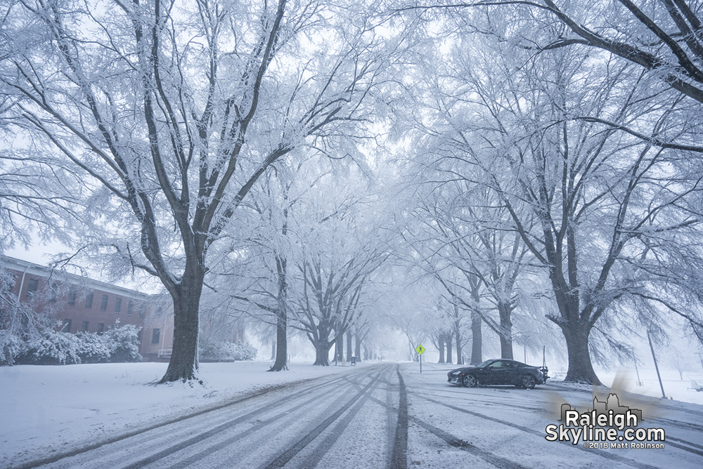 Snow covered oak trees at Dix Park