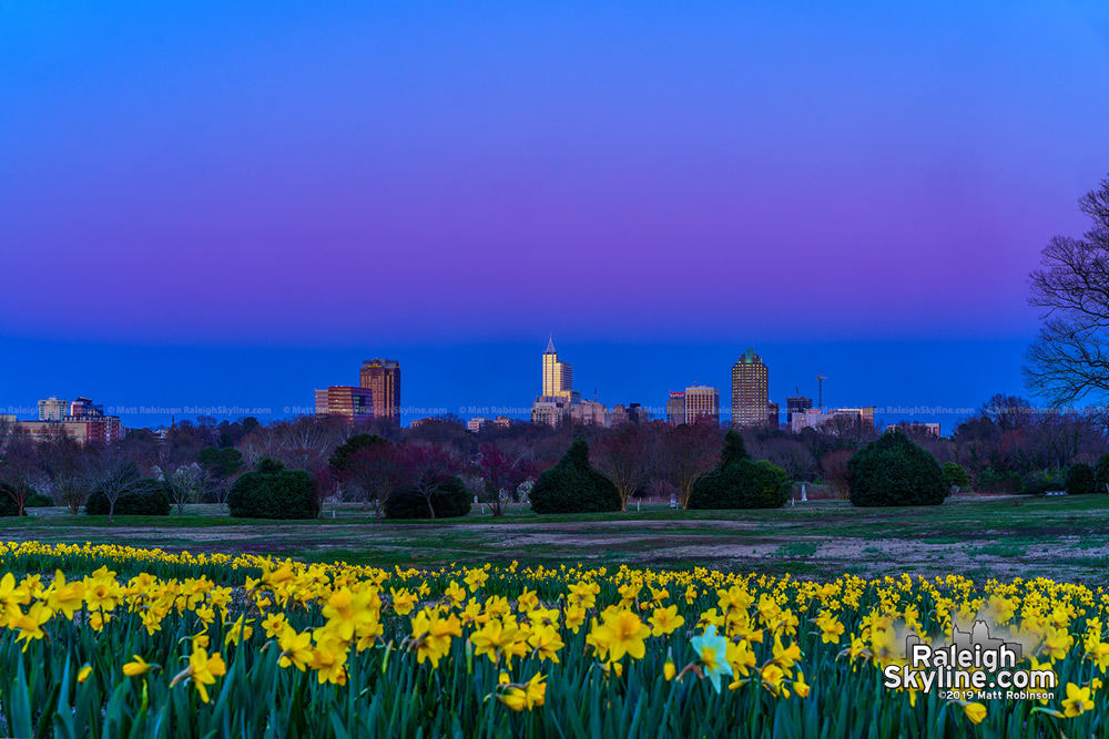 Sunset at the daffodils at Dix Park